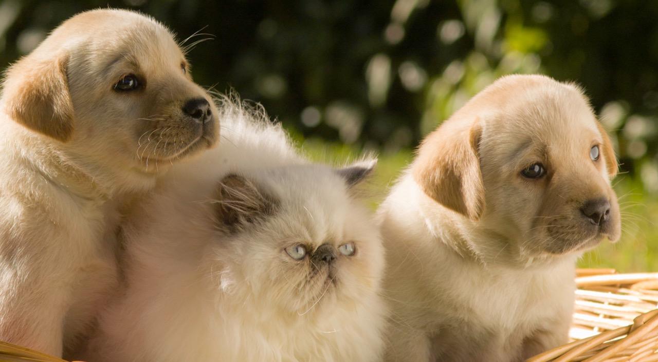 Plano de Saúde para Pets - Cães e Gatos